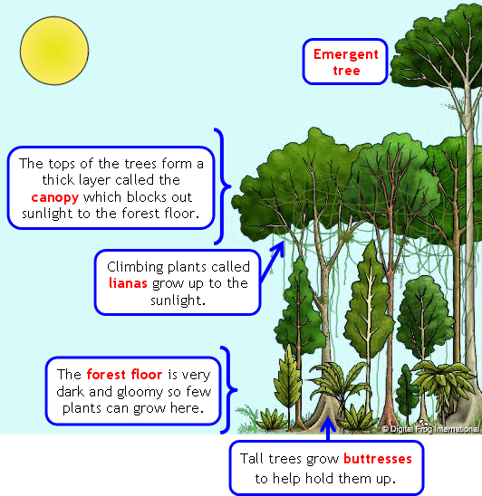 image about Layers of the Rainforest Printable identified as Levels of a Rainforest